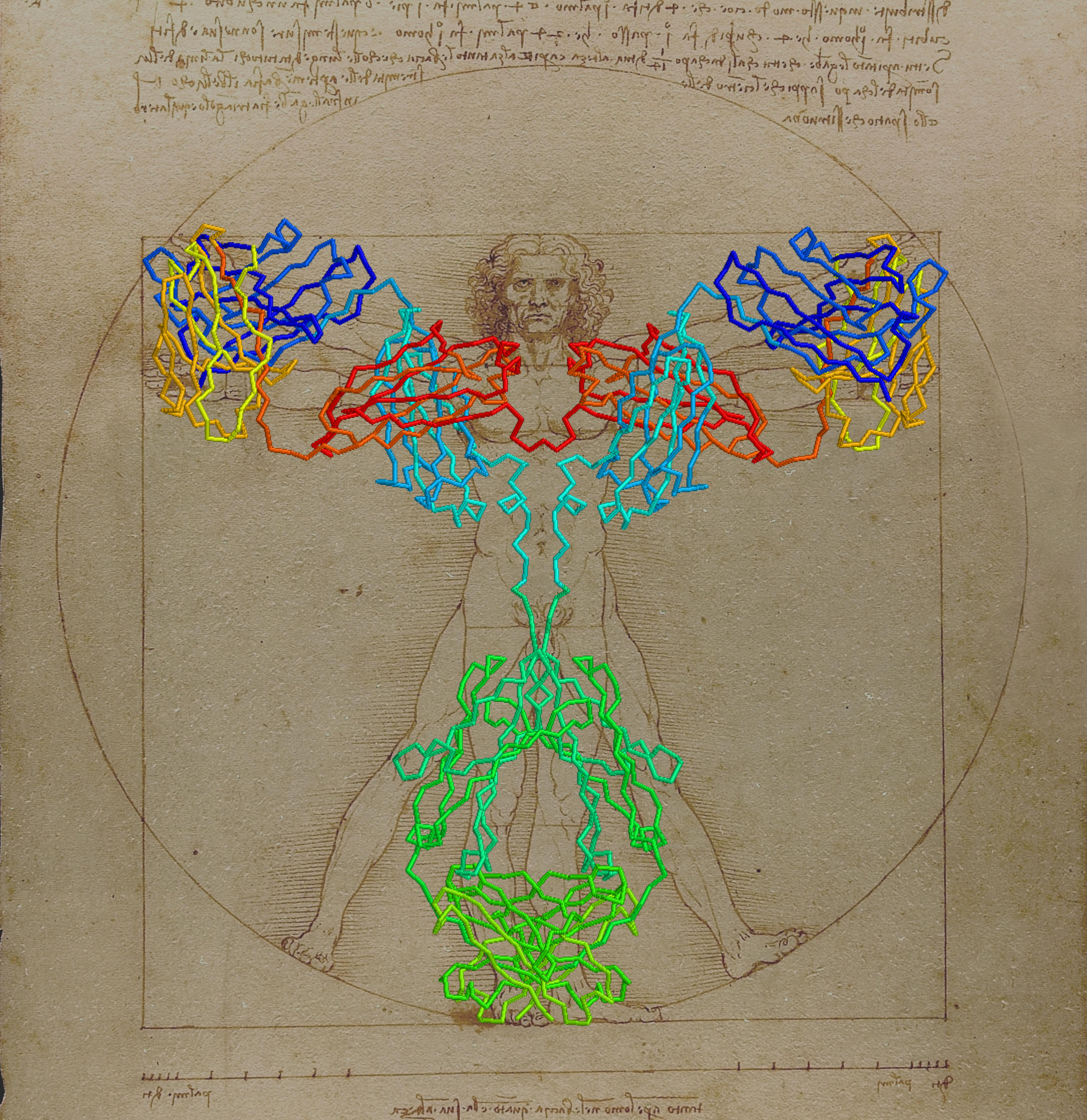 Fig. 3 Julian Voss-Andreae, Padlan's Antibody superimposed on Vitruvian Man, Computer sketch of the idea for Angel of the West, 2005